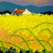 yellow Meadow Ireland Art Print