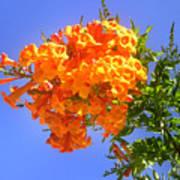 Yellow-orange Horn Flowers 01 Art Print