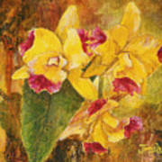 Yellow Orchids Acrylic Art Print