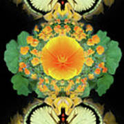 Yellow Poppy Art Print