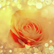 Yellow Rose And Joy Art Print