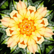 Yellow Rose Kaleidoscope  Art Print