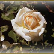 Yellow Rose Of Texas Art Print by Trina Prenzi