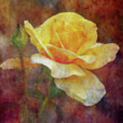 Yellow Rose With Raindrops 3590 Idp_2 Art Print