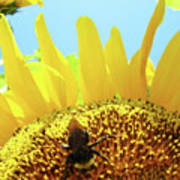 Yellow Sunflower Art Prints Bumble Bee Baslee Troutman Art Print