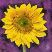 Yellow Sunflower Art Print