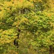 Yellow Trees In Fall Art Print