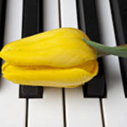 Yellow Tulip On Piano Keys Art Print by Garry Gay
