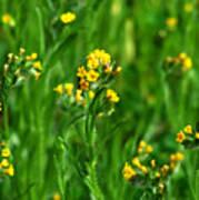 Yellow Wildflower Photograph Art Print