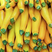 Yellow Zucchini Art Print