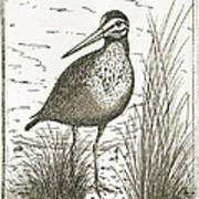 Yellowlegs Shorebird Art Print