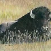 Yellowstone Loner Art Print