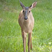 Yes Deer Art Print