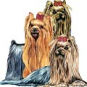 Yorkshire Terriers Art Print