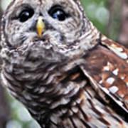 You Can Call Me Owl 2 Art Print