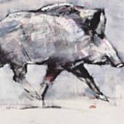 Young Boar Art Print