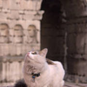 Young Cat Old Monument Art Print