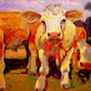 Young Cow Art Print