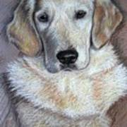 Young Golden Retriever Art Print