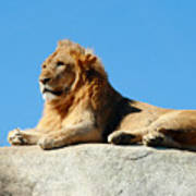 Young Male Lion Reclining On A Rock Art Print