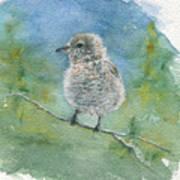 Young Northern Shrike Art Print