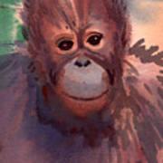 Young Orangutan Art Print