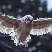 Young Owl Art Print