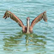 Young Pelican 0087 Art Print