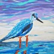 Young Seagull Coastal Abstract Art Print