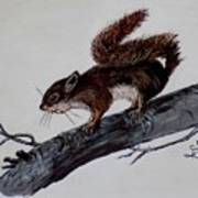 Young Squirrel Art Print