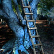 Young Woman Climbing A Tree Art Print
