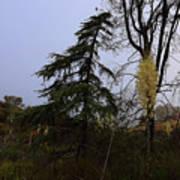 Yucca Filamentosa Rainy Day In Malibu Art Print