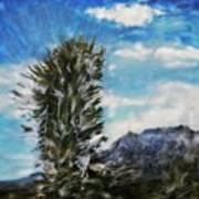 Yucca Glow  Art Print