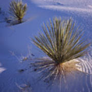 Yucca In Gypsum Sand Art Print