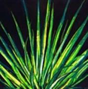 Yucca Art Print