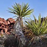 Yucca Pair Art Print