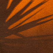 Yucca Shadow Art Print