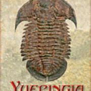 Yuepingia Fossil Trilobite Art Print