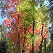 Yummy Fall Colors Print by Sandy Tracey