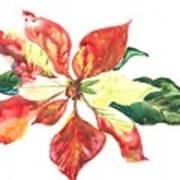 Yupo Poinsettia Art Print