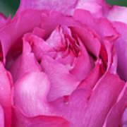 Yves Piaget Rose Art Print