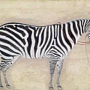 Zebra, C1620 Art Print