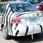 Zebra Car Rear Art Print