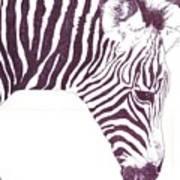 Zebra Colt Art Print