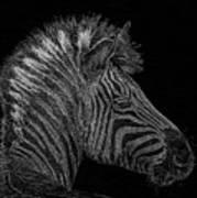 Zebra Computer Drawing Art Print