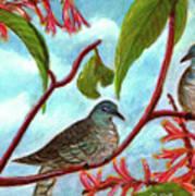 Zebra Doves Or Barred Dove Birds #309 Art Print