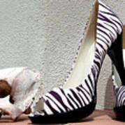 Zebra Heels And Skull Art Print