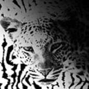 Zebra Kill Art Print