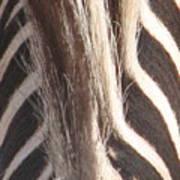 Zebra Mane Art Print
