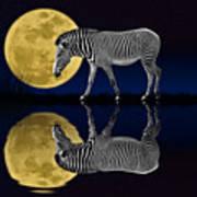 Zebra Moon Art Print